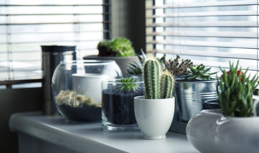 Succulents interior landscaping
