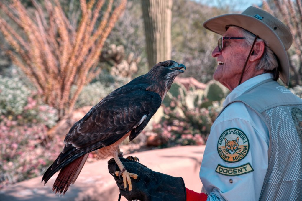 Man holding a Hawk at the Arizona-Sonora Desert Museum