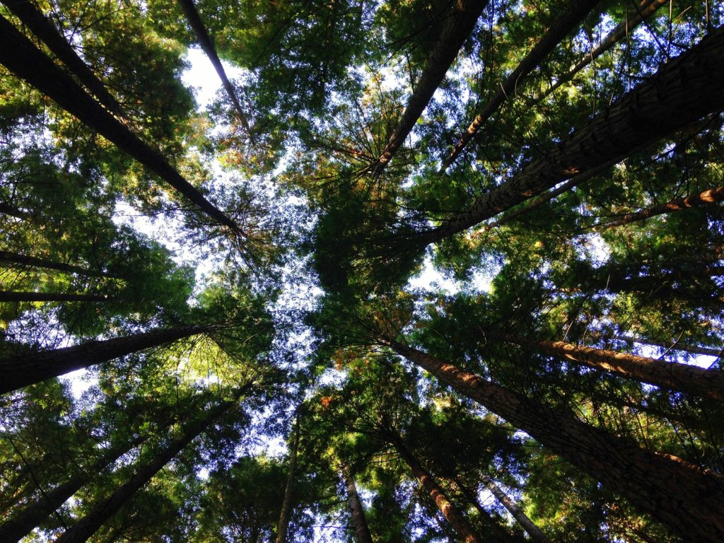 green trees sky environment